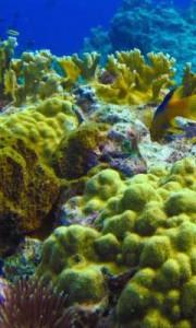 anse-caraibe-plongee