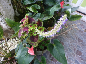 Jardin Botanique 19