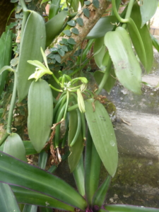 Parc Orchidées Vanille
